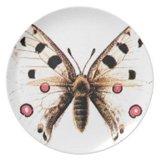 Spotted moth plate