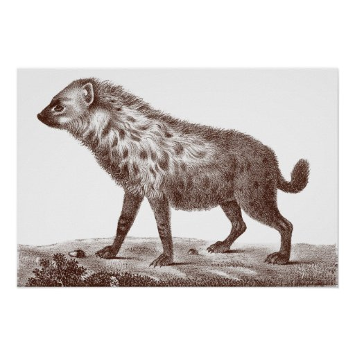 Spotted or Striped Hyena From Antique Print