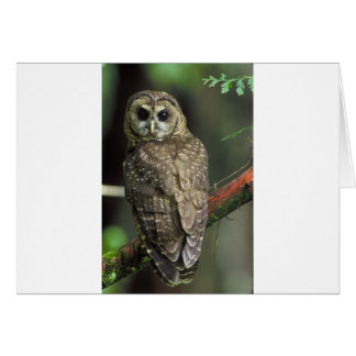 Spotted owl card