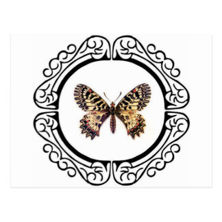 spotted ringed butterfly postcard