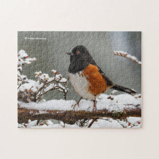 Spotted Towhee on the Grapevine Jigsaw Puzzle