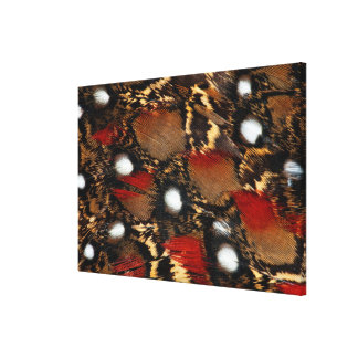 Spotted Tragopan Feather Abstract Canvas Print