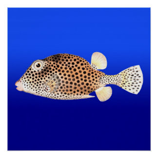 Spotted Trunkfish on Blue Background Poster