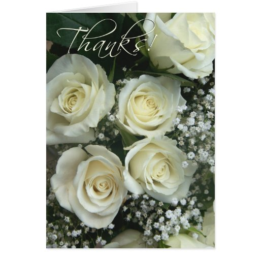 Spray of cream rose Thank you notes! Cards
