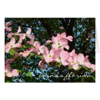 "spray of pink dogwood  ""cornus florida"" card"