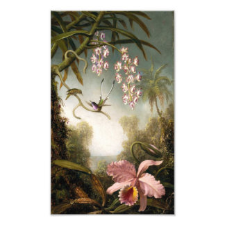 Spray Orchids with Hummingbird Print Photo