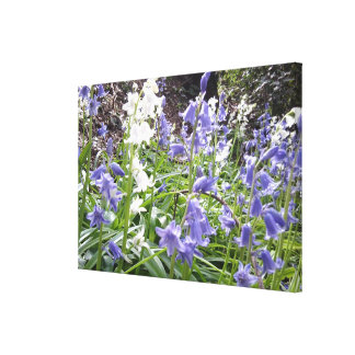 Spring 2016 Bluebells Photo 1 Wrapped Canvas Stretched Canvas Print