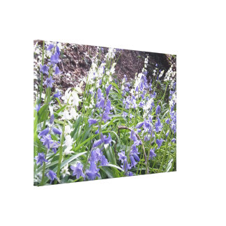 Spring 2016 Bluebells Photo 2 Wrapped Canvas Stretched Canvas Print