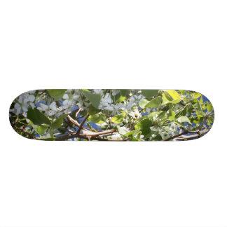 spring 21.3 cm mini skateboard deck