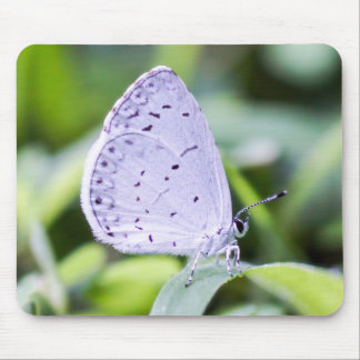 Spring Azure Butterfly Mousepad