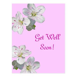 Spring Beauty Wildflower Get Well Soon Postcard