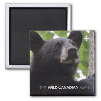 Spring - Black Bear Magnet