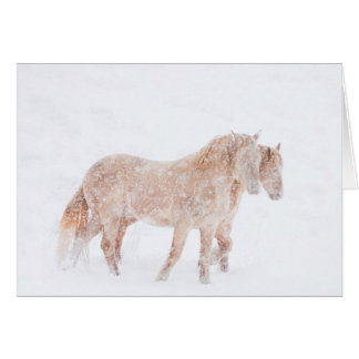 Spring Blizzard - Wild Horse Greeting Card