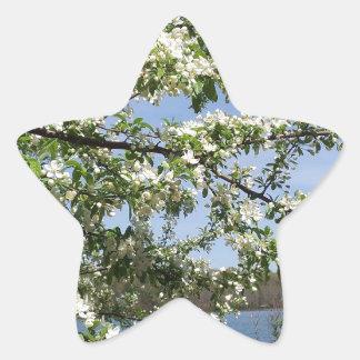 Spring Bloom Star Sticker