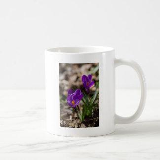 Spring Blooming Purple Crocus Flowers Mugs