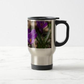 Spring Blooming Purple Crocus Flowers Coffee Mugs
