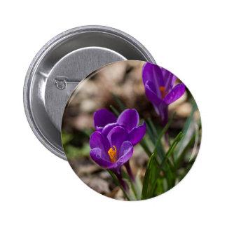 Spring Blooming Purple Crocus Flowers Pin