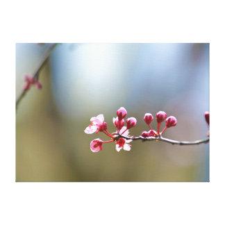Spring Blooms Canvas Prints
