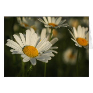 Spring Blooms Card