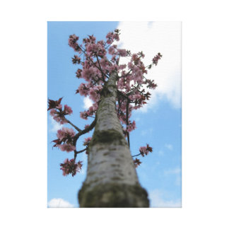 Spring Blossom Gallery Wrapped Canvas