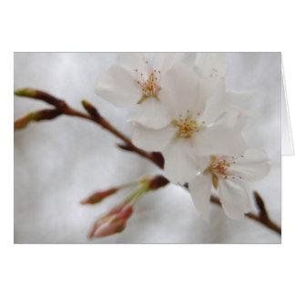 Spring Blossom Card