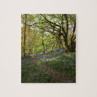 Spring bluebell woods jigsaw puzzle