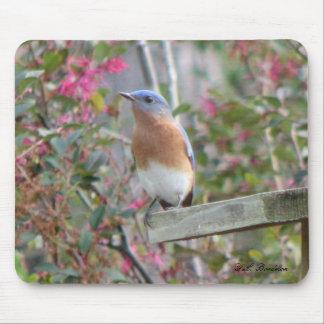 Spring Bluebird Mousepad