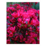 """Spring Boom""  (Photo Print)"