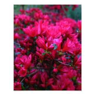 """Spring Boom""  (Photo Print) Photo Print"