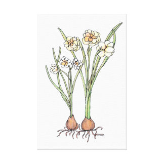 Spring Bulbs Canvas Print