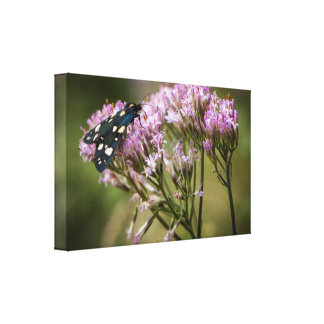 Spring butterfly on wildflowers canvas print