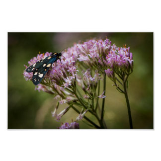 Spring butterfly on wildflowers poster