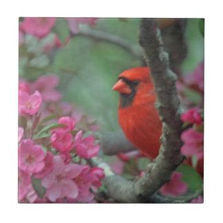 Spring cardinal ceramic tile