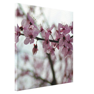 Spring Cherry Blossom Floral Stretched Canvas Print
