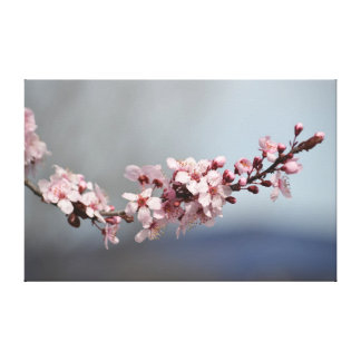 Spring Cherry Blossoms Stretched Canvas Print