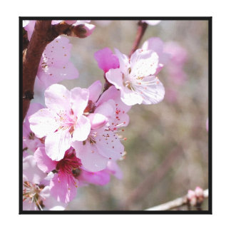 Spring Cherry Blossoms Stretched Canvas Prints