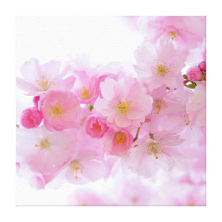 Spring - Cherry Blossoms Canvas Print