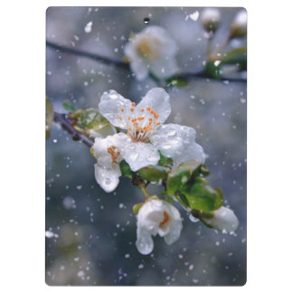 Spring Cherry Blossoms Flowers Lives Clipboard