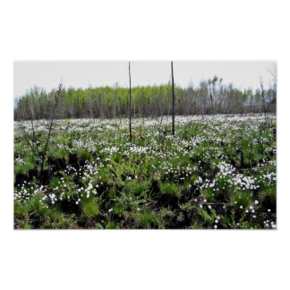 Spring Cotton grass on Grid 37394 Print