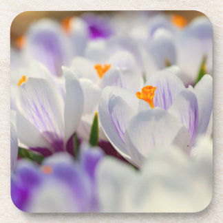 Spring Crocus Coaster