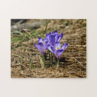 Spring Crocuses Jigsaw Puzzle