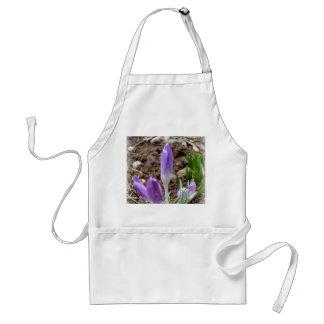 Spring crocuses standard apron