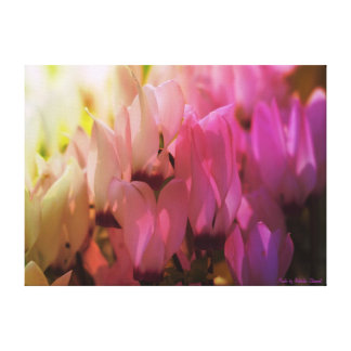 Spring cyclamen stretched canvas print