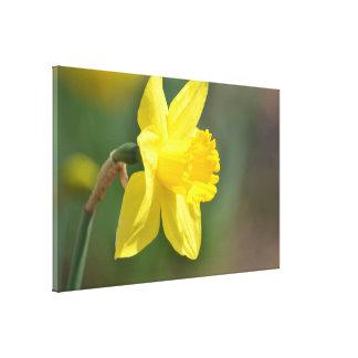 Spring Daffodil Gallery Wrap Canvas
