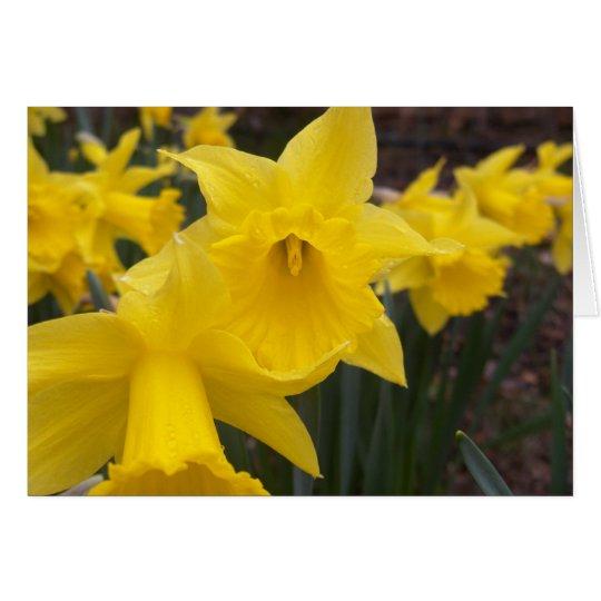 Spring daffodils card