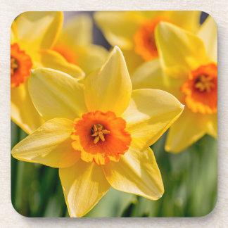 Spring Daffodils Coaster