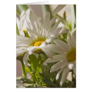 Spring Daisies - Greeting Card