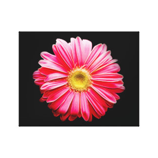 Spring Daisy Stretched Canvas Print