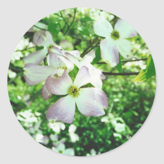 Spring Dogwood Classic Round Sticker