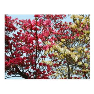Spring Dogwood Flowers Postcard